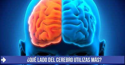 ¿Qué lado del cerebro utilizas más?